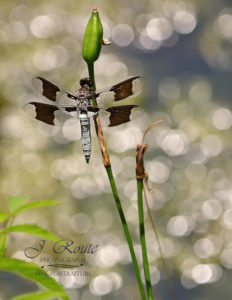 A photo of a dragonfly on a plant.
