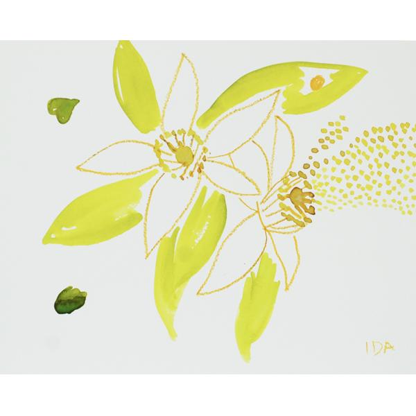 Watercolor yellow/green flower on white paper.