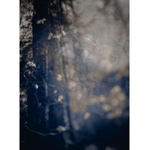 Dark pigment print of a tree trunk.
