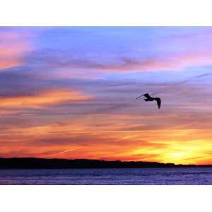 Print of a bird flying over the ocean during sunset. The sky is orange and purple.